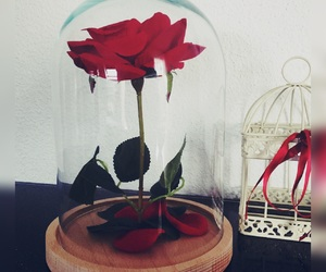 beauty and the beast, gift, and rose image