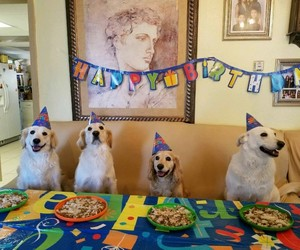 birthday party, dogs, and dogs in hats image
