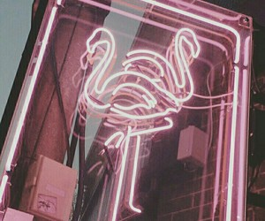 neon, pink, and flamingo image