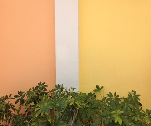 aesthetic, yellow, and colors image