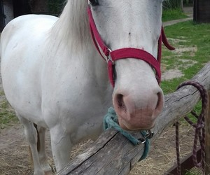 animal, animals, and horse image