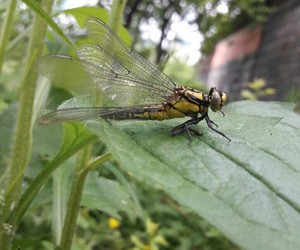 bug, nature, and dragonfly image