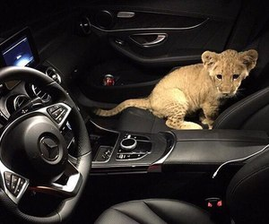 animal, car, and luxury image