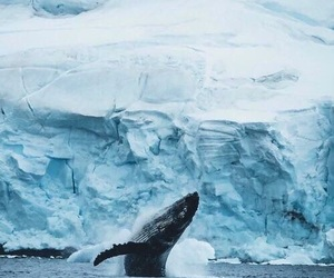 ice and whale image
