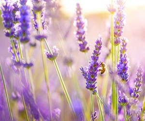 flowers, purple, and bee image