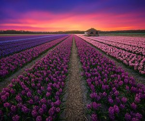 field, flower, and nature image