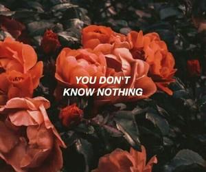 rose and Lyrics image