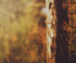 #goldenhour image