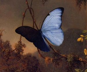butterfly, art, and nature image