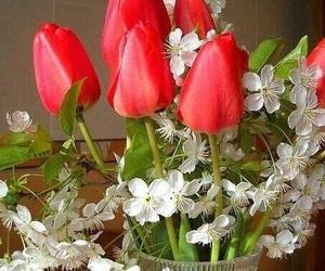 lale, kırmızı, and çiçek image