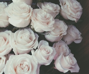 roses and white image