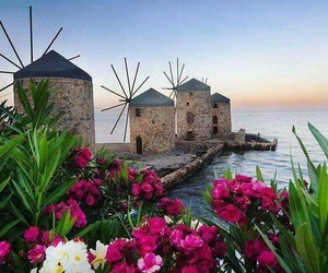 beauty, flowers, and Greece image