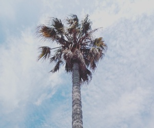 indie, palm trees, and paradise image