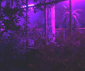 purple, aesthetic, and plants image