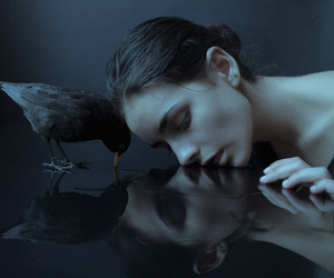 bird, dark, and Darkness image