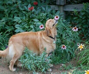 dog, flowers, and spring image