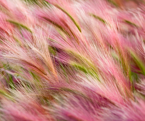 background, pink, and barley image