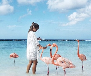 beach, summer, and flamingo image
