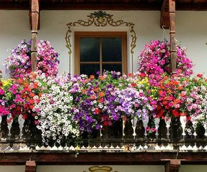 flowers, balcony, and flores image