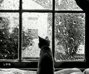 cat, animal, and rain image