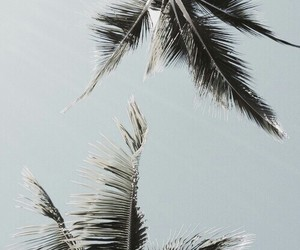 palms, wallpaper, and summer image