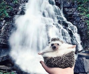 adorable, nature, and waterfall image