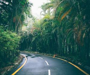 palm trees, summer, and rain image