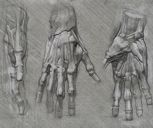 sketch, drawing, and anatomy image