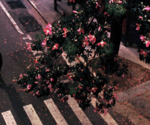 header, aesthetic, and flowers image