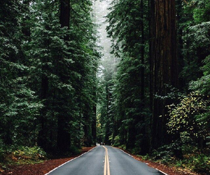 forest, road, and nature image