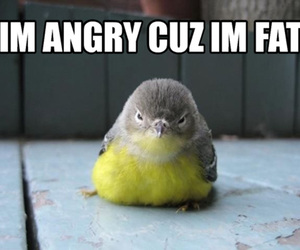 bird, fat, and cute image