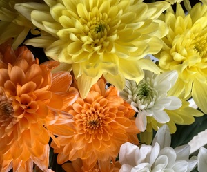 alternative, beautiful, and flower image