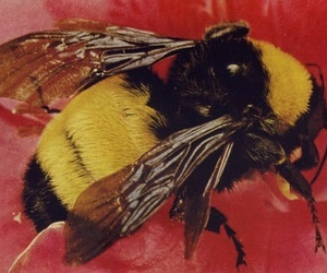 bee and theme image