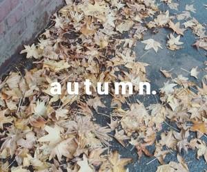 autumm, cold, and otoño image