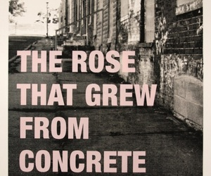 grow, quote, and rose image