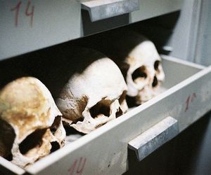 skull, bones, and death image