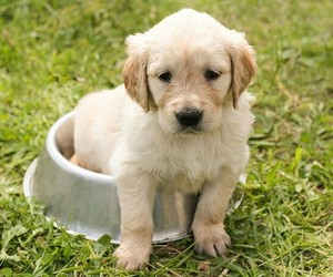 animals, puppies, and puppy image