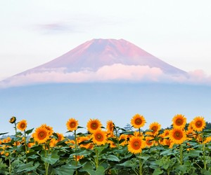 sunflower, flowers, and mountains image