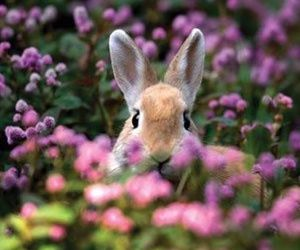 flowers, rabbit, and nature image