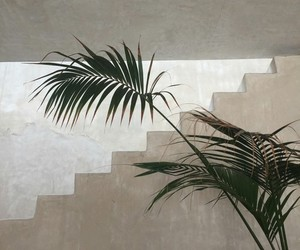 plants, green, and minimal image