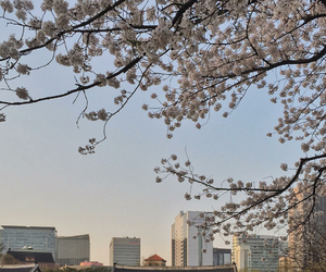 aesthetic, korean, and nature image