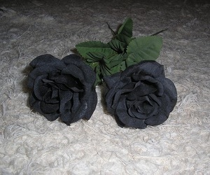 rose and black image