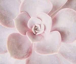 pink, pastel, and flowers image