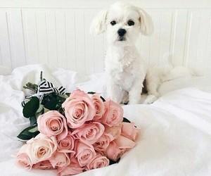animal, dog, and morning image