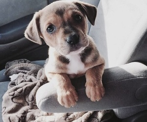 cute dogs, lovely dogs, and cuteness overload image