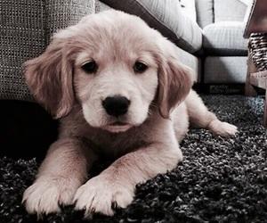 cuteness overload, puppies, and cutiepie image