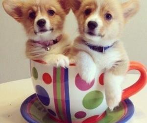 dog, adorable, and corgi image