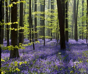 forest, belgium, and flowers image