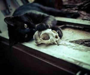 cat, skull, and black image