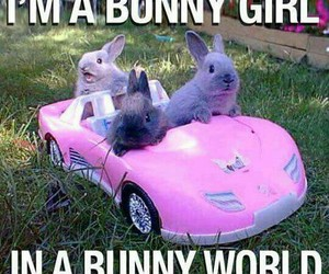 bunny, funny, and barbie image